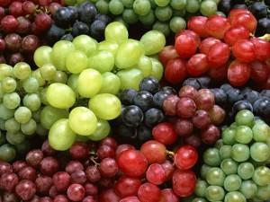 catalogazione vitigni autoctoni